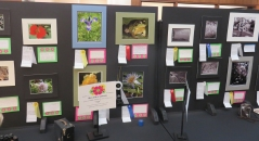 "2017 Flower Show ""Kodak Moments"""