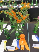Award of Merit Flowering Perennials_Gayle Ruiter