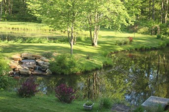 Kate Przybytek's Pond View