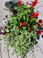 Containers Barbara Lobdell Mixed Species Container Salvia, Ornamental Cabbage, Geranium, Wave Petunia, Variegated Vinca Vine, Lobelia