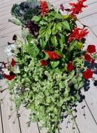 Containers Barbara Lobdell Mixed Species Container Salvia, Ornamental Cabbage, Geranium, Wave Petunia, Variegated Vinca Vine, Lobelia