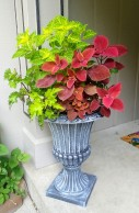 Containers Pam Brown Coleus Redhead and Coleus Rodeo Drive