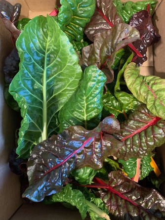 Fresh Chard from the Garden in December by Barbara Lobdell