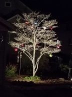 "Sue Foose ""We started decorating this outdoor tree a couple years ago and each year it gets a bit more Magical to me!"""